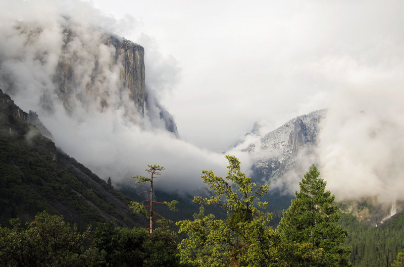 Cloud-wrapped El Capitan w/ hill trees in foreground, Tunnel View.  Looked like a painting to me. S95 #4520