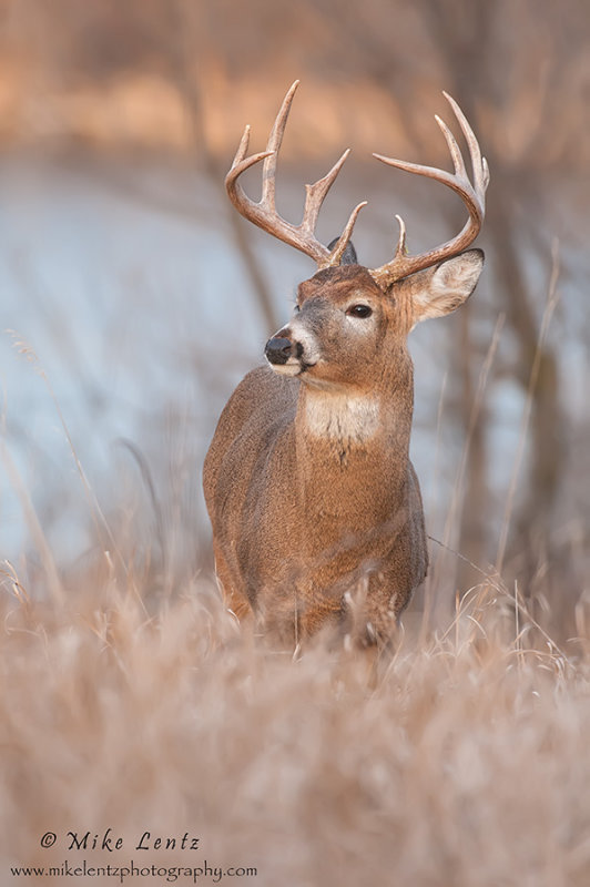 Buck near lake