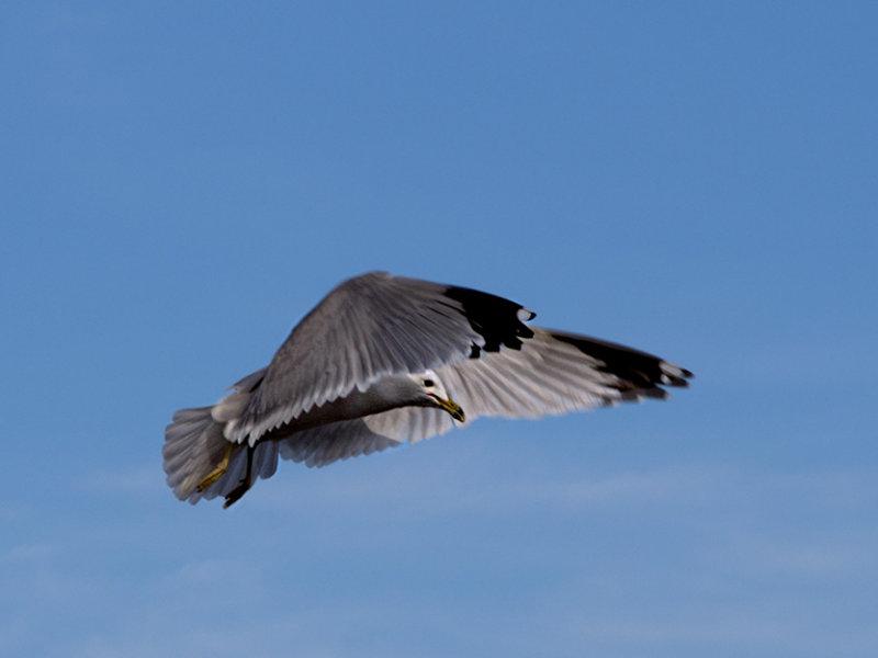Wings forward
