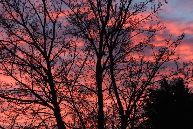 Winter Morning glory