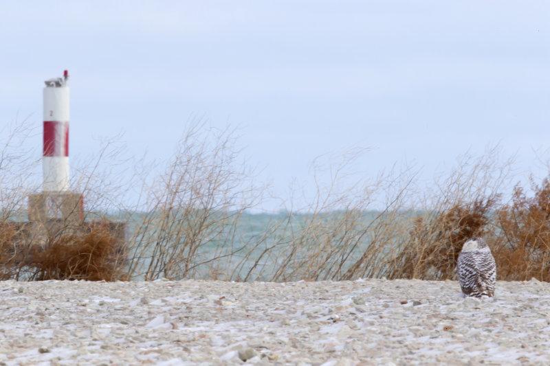 Snowy 0246