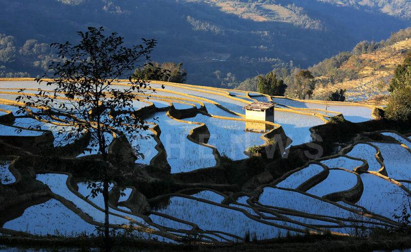 Terraced rice fields, QuanFuZhuang village
