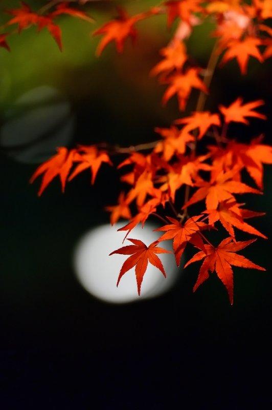 Light-up at Shogun-tsuka KYOTO