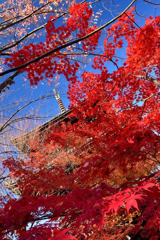 Shinnyo-do Temple at Kyoto