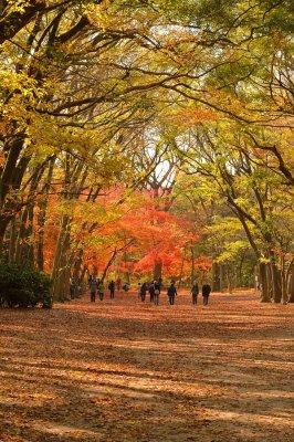 Shimo-kamo Shrine at Kyoto