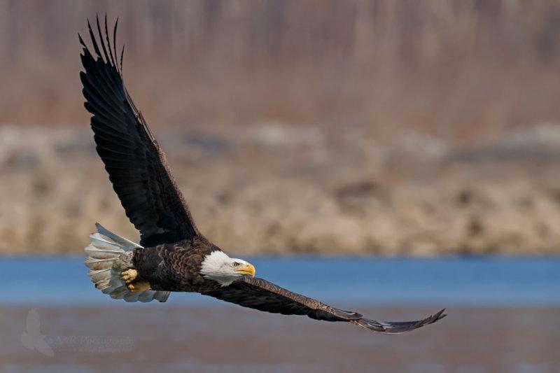 eagle 13 pb.jpg