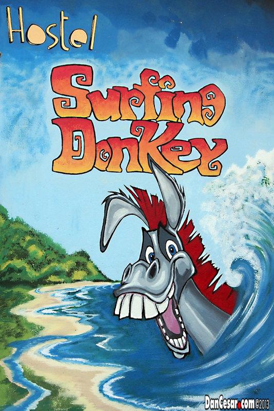 Surfing Donkey