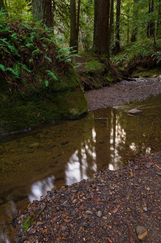 03152013-Purisima_Creek-52.jpg