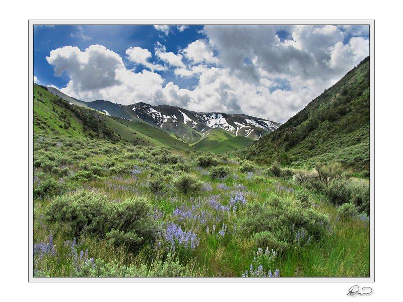 Lupine  Sage Big Creek Canyon.jpg