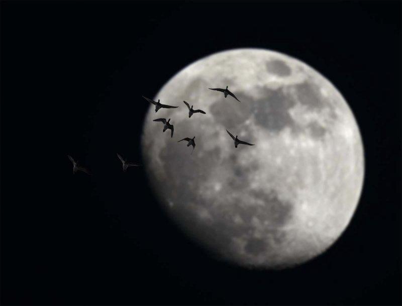 moon manipulation