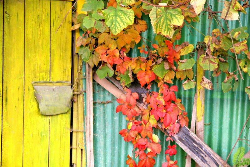 Door in fall