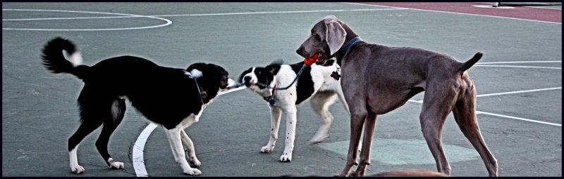 puppieswith Atticus.jpg