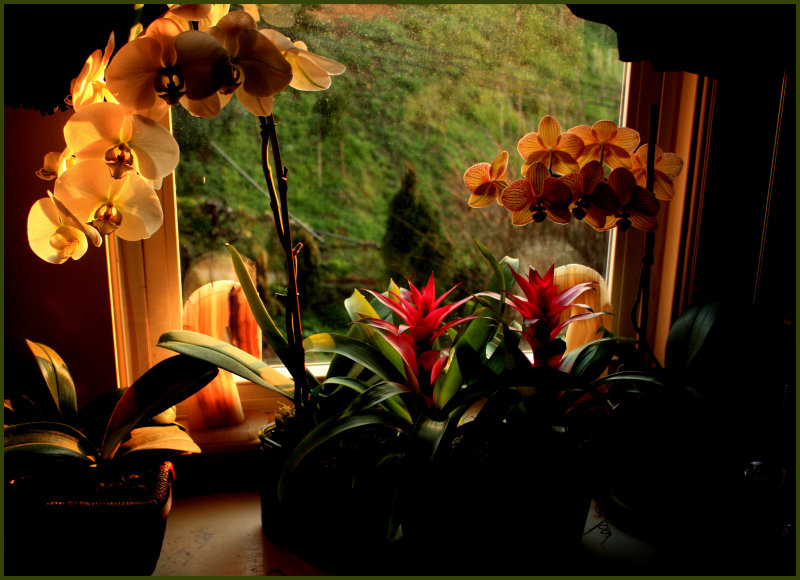 early spring morning window.JPG