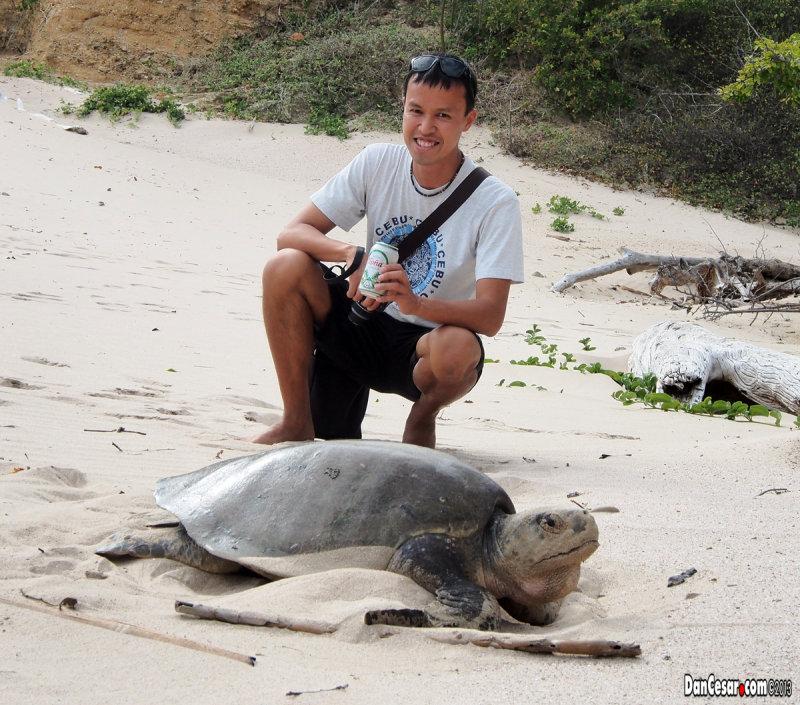 csar Turtle.jpg