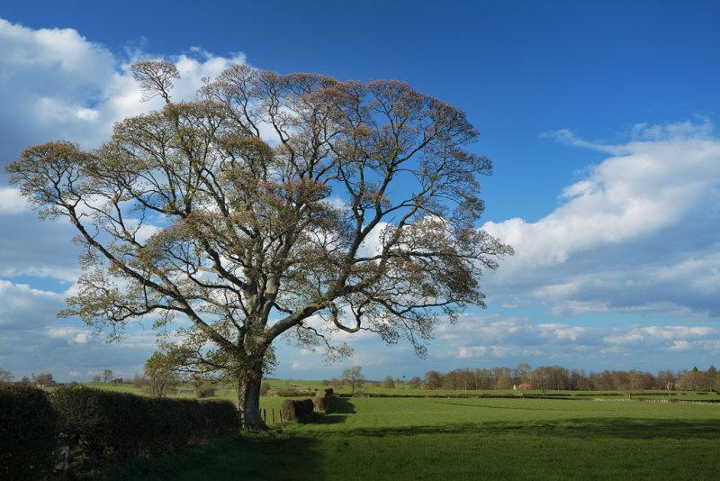 20130501 - Tree