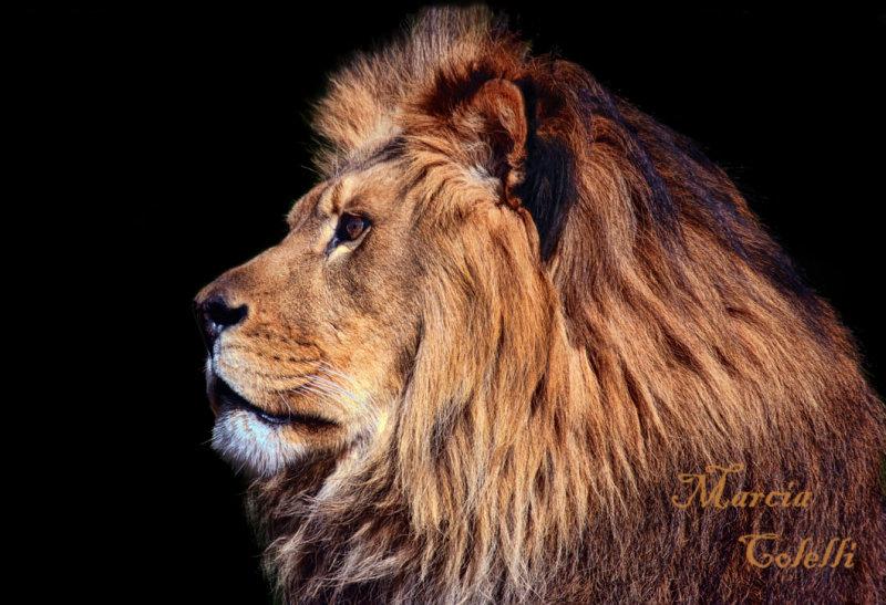 KING OF BEASTS-4233.jpg