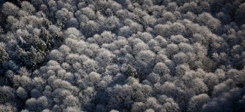 Snowy Alders <br>(Concrete_011113_020-9.jpg)