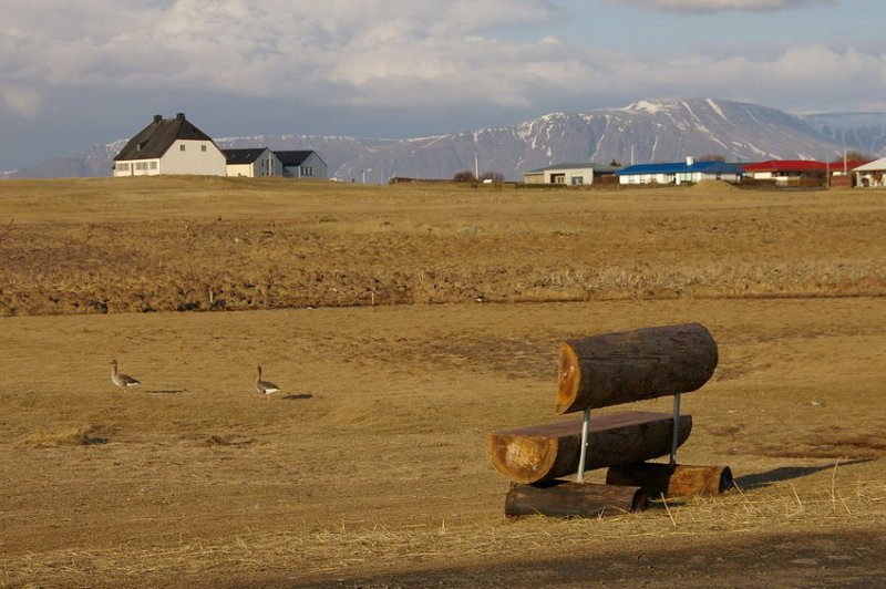 Bench and two geese