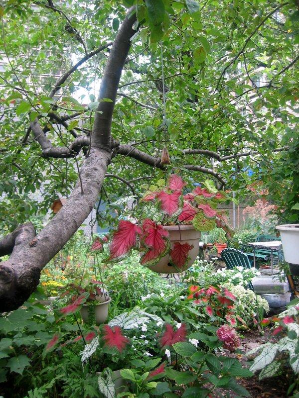 Garden View - Under an Apple Tree
