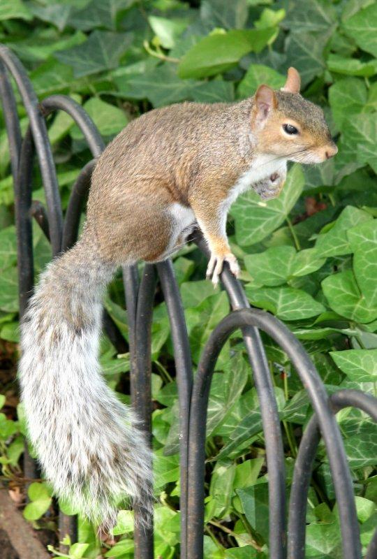 LaGuardia Place Garden Squirrel