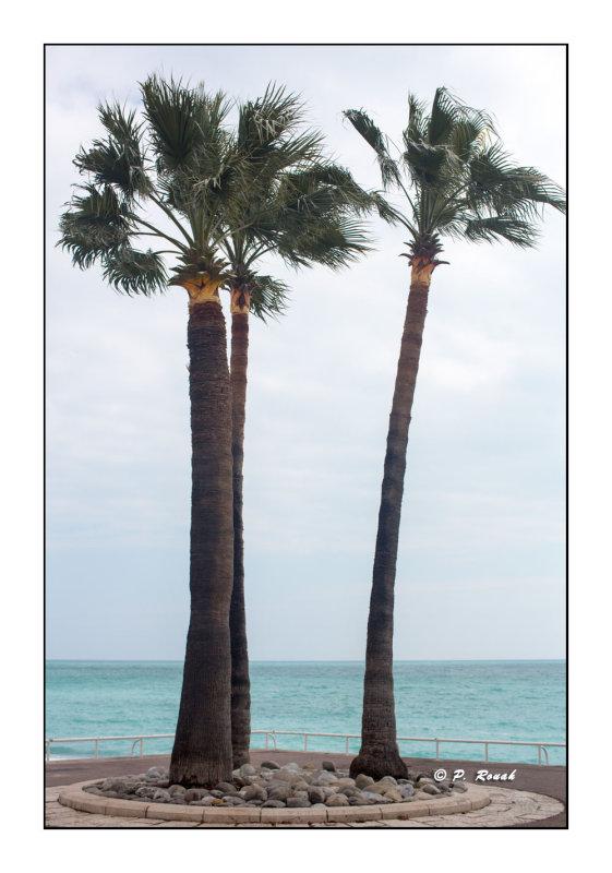IPS-5 - Palmiers devant la Méditerranée - 0610