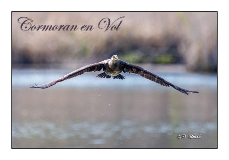 Cormoran en vol - 6380