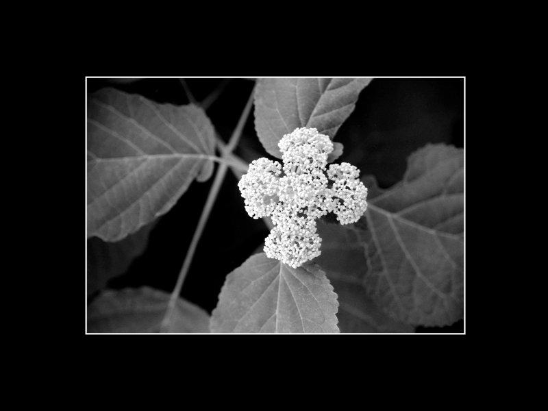 williamsburg flower.jpg