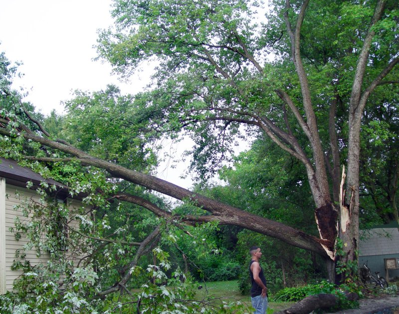 Neighbors Tree-My House SATURDAY  August 26th