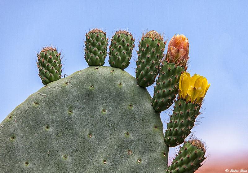 Cacti on Verano