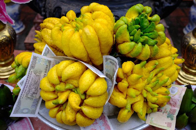 Finger citron (fructus citri sarcodactylis)