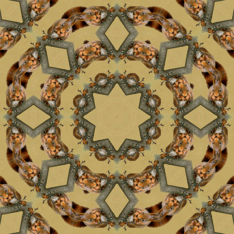 Squirrel kaleidoscope