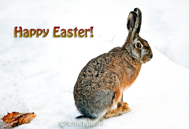 #Happy Easter or just Happy Weekend everyone!