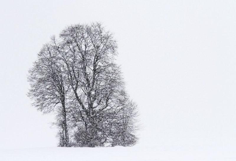 Winter zima_MG_0674-111.jpg