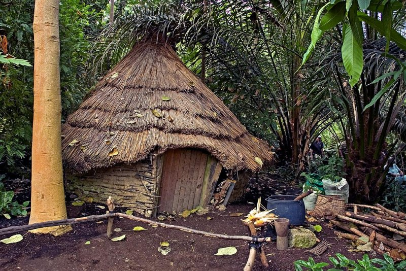 Jungle hut, Eden Project (2562)