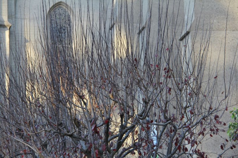 Grace Cathedral Wintertime Trees