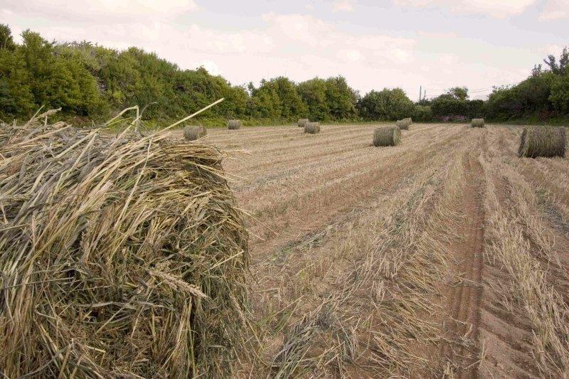 West Over farm gardens at Heydon, Sandys