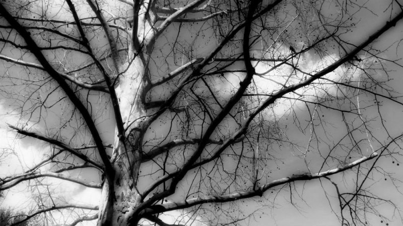 branched