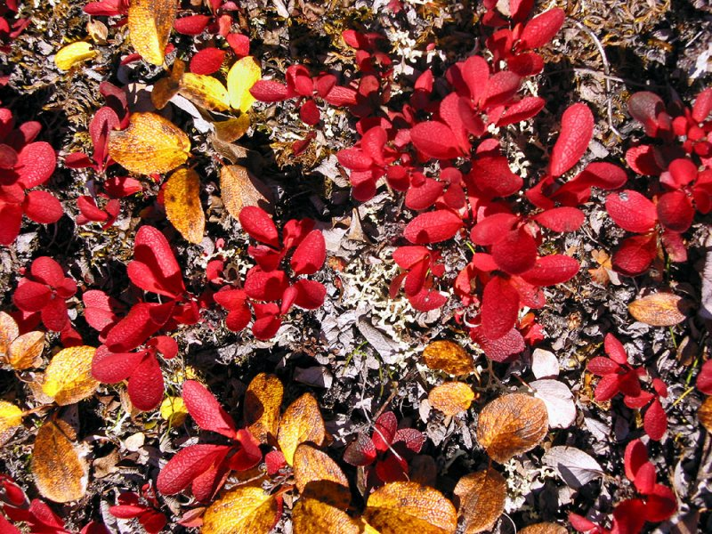 Tundra colours