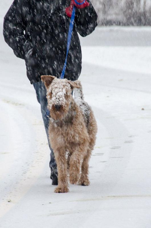 12-24-2012 - Happy Dog<br><font size=3>ds20121224-0015w.jpg</font>