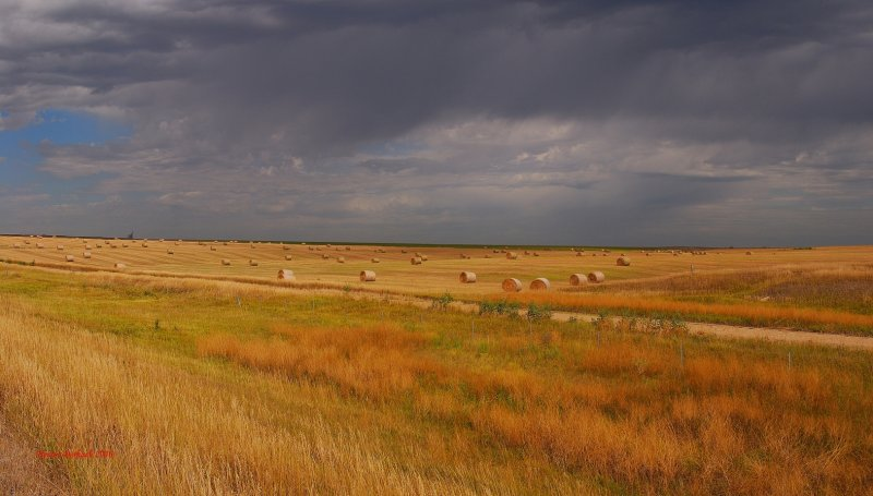 Kansas Golden Harvest