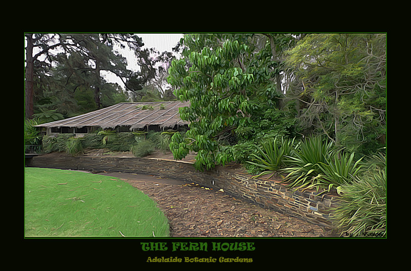 The Fern House