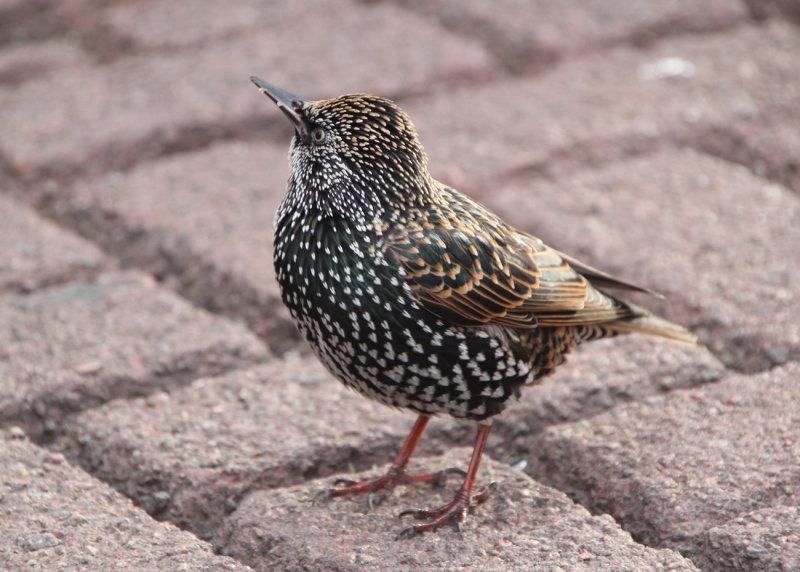 341:366<br>  LittleBird