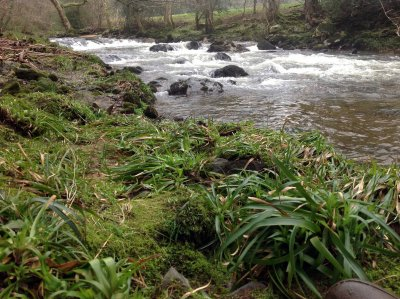 Day 2 of the Devon Dipper Diary 2013