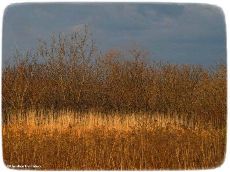 Late day sun near the bog
