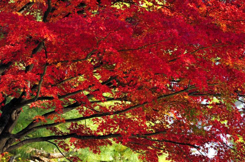 Autumn, Today