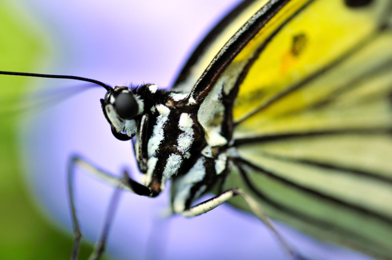 Butterfly Close