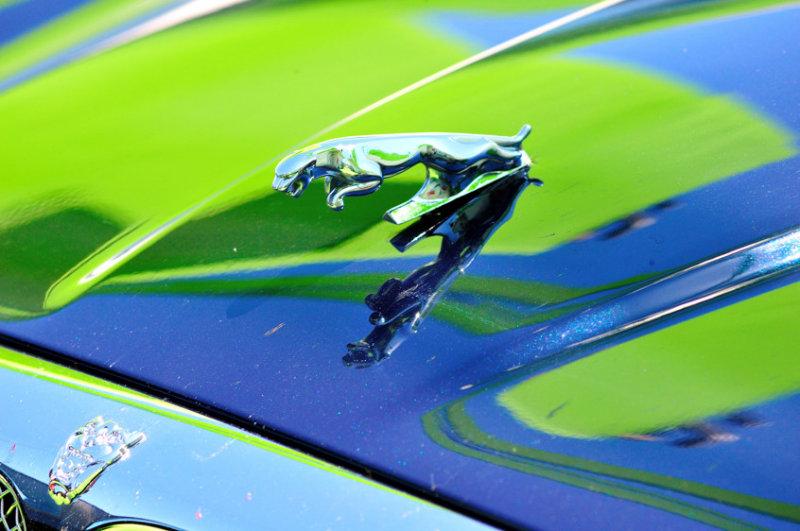 Reflections of a Jaguar