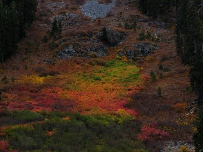 Natures Paint Brush - Squaw Valley
