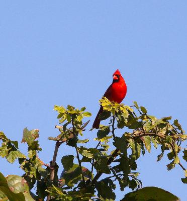 Cardinal, Survival Area, Patrick AFB