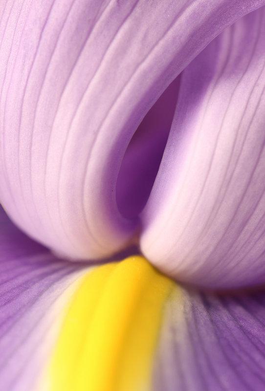 Iris 9.jpg